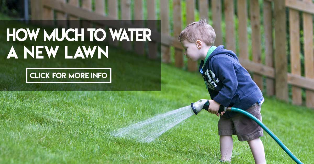 How much to water a new lawn