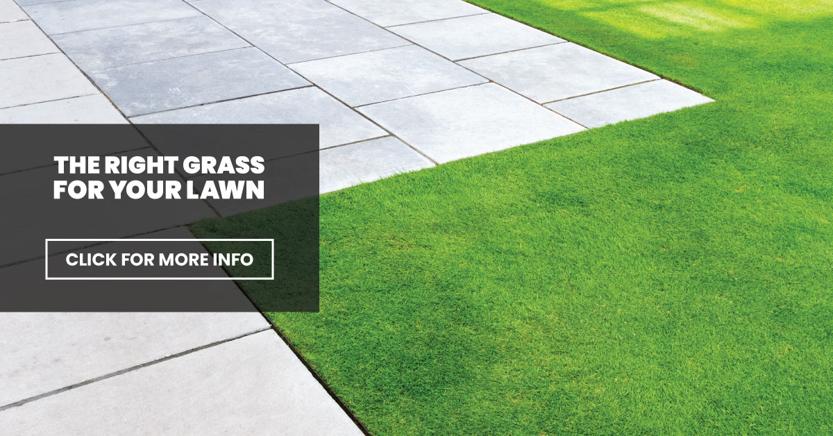 The right grass for your lawn