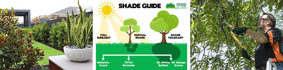 How can I ensure my lawn gets the sunlight it needs?