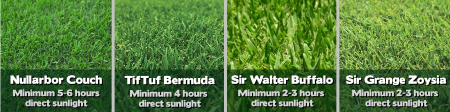 How many hours of direct sunlight does my lawn need?