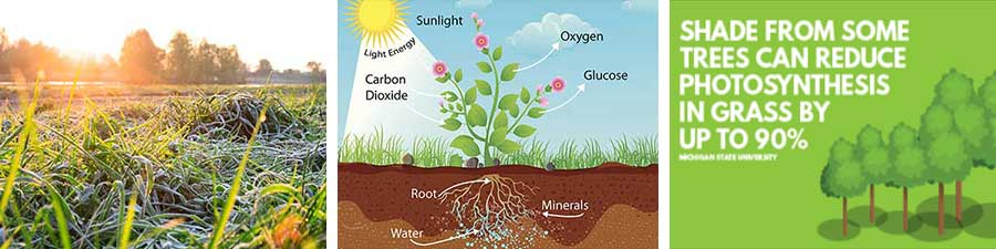 Why does your lawn need sunlight?