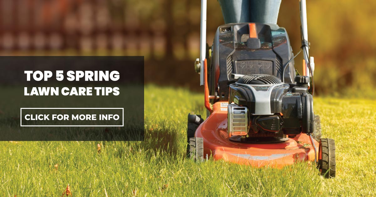 Top 5 spring lawn care tips