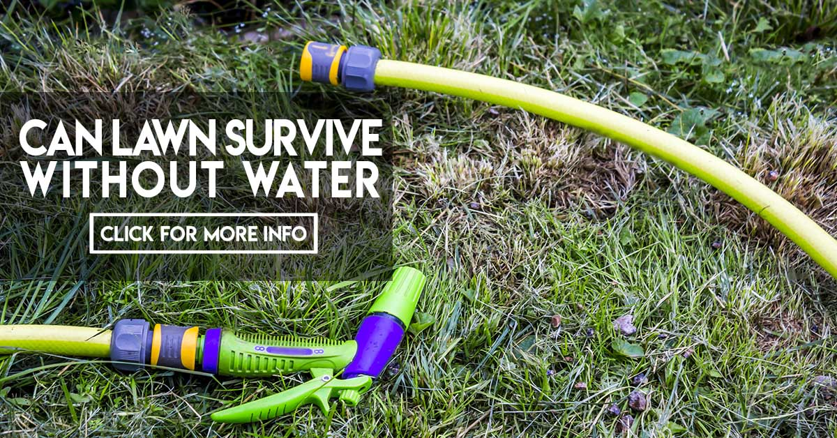 Can lawn survive without water