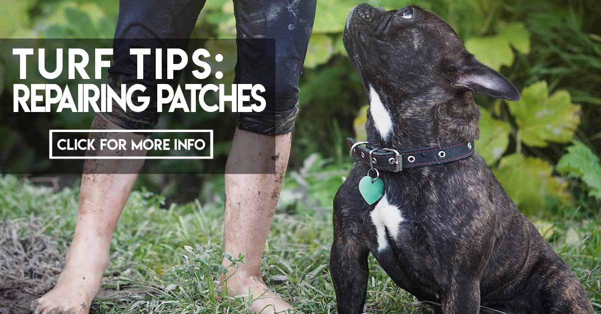 Turf Tips Repairing Patches