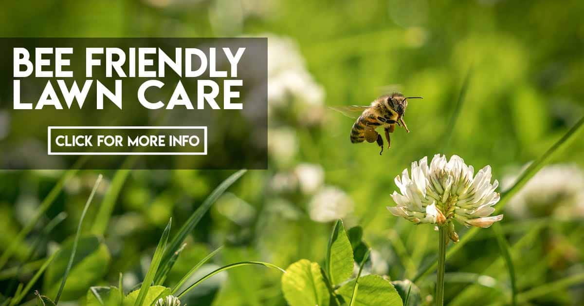 Bee Friendly Lawn Care