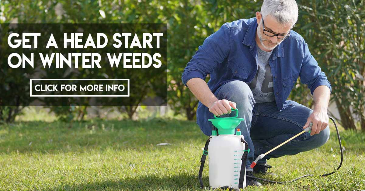 Get A Head Start On Winter Weeds