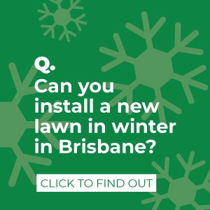 Can you lay turf in winter?