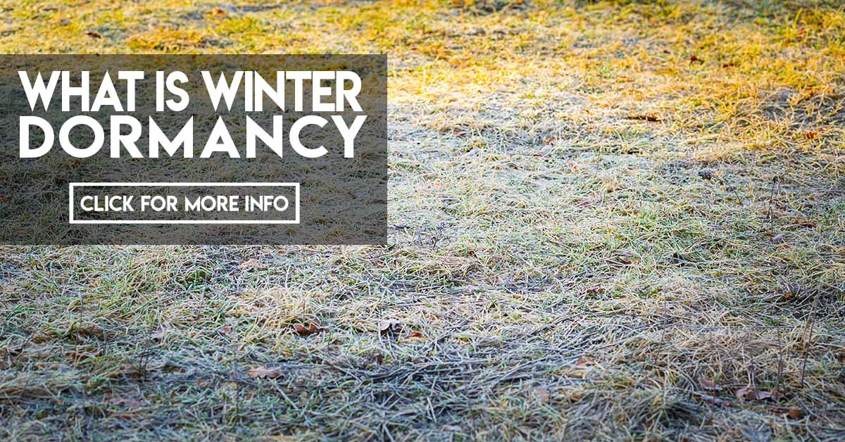 What is winter dormancy?