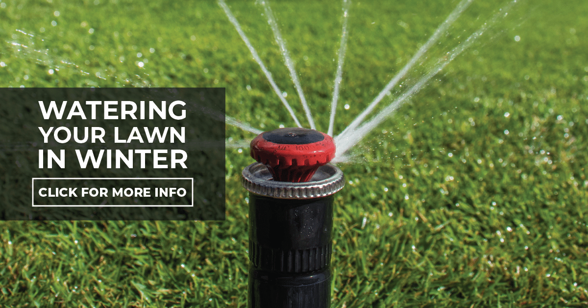Watering your lawn in Winter