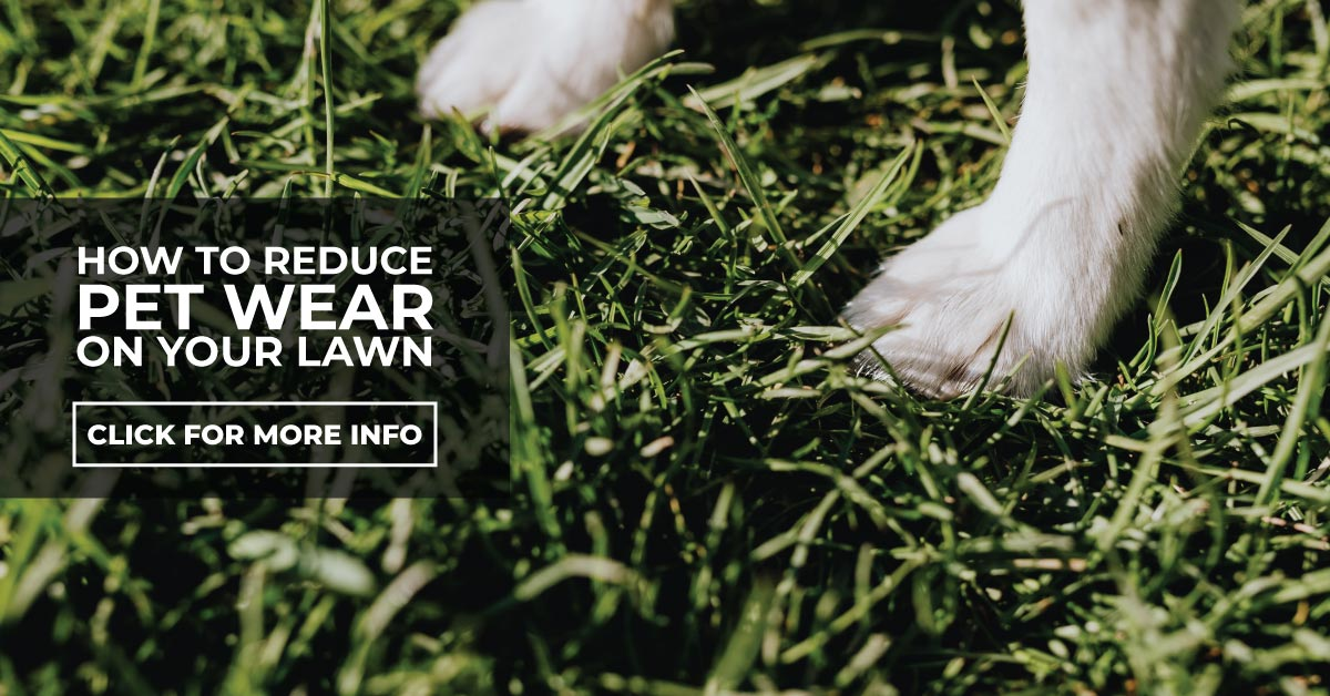 How To Reduce Pet Wear On Your Lawn