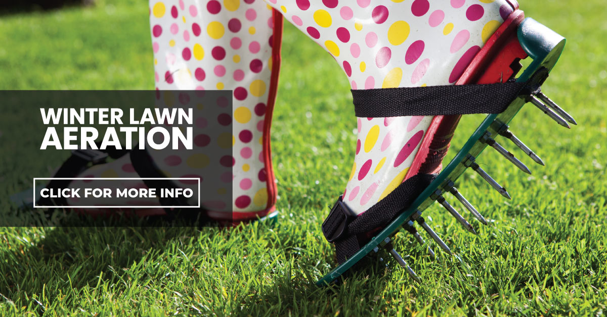 Winter Lawn Compaction & Aeration