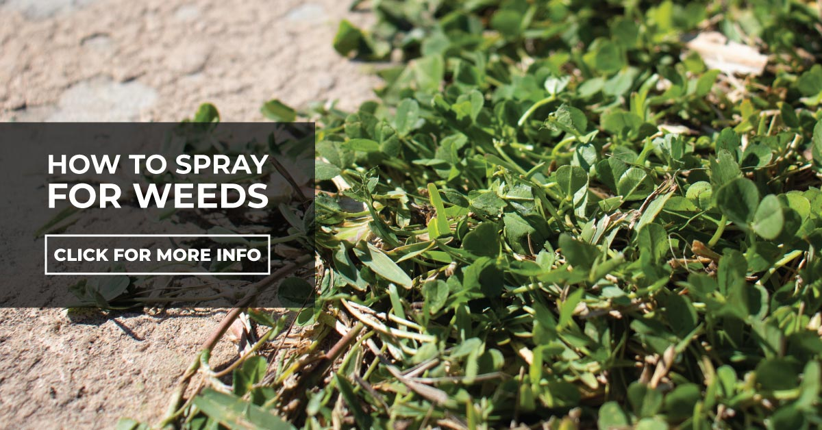 How to spray for weeds