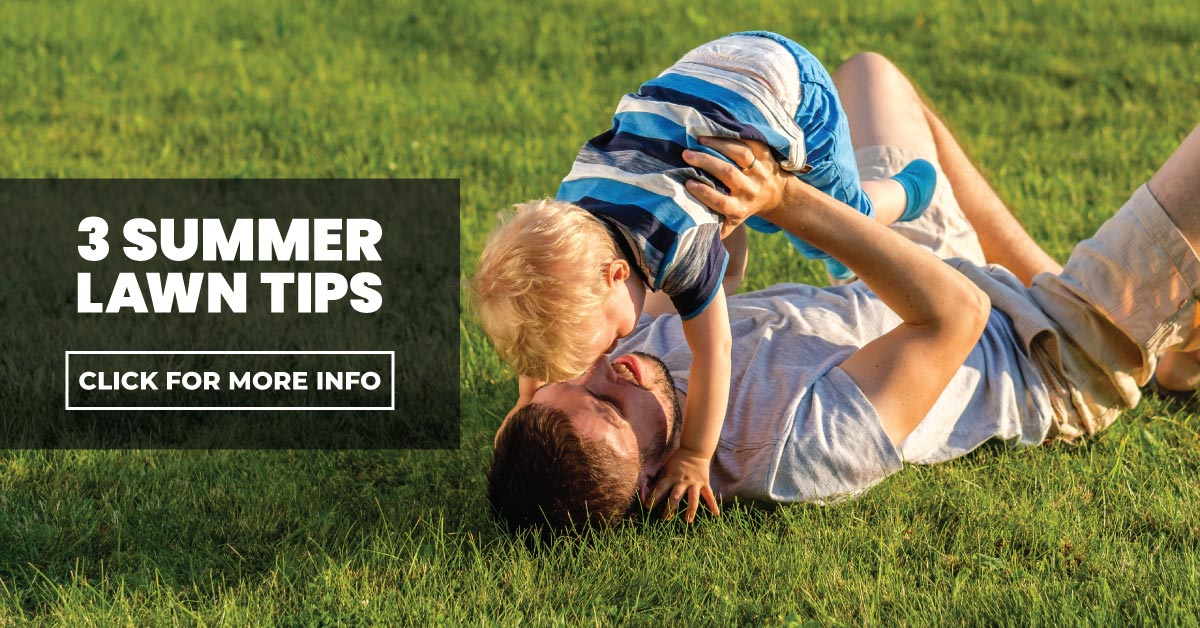 3 Summer Lawn Tips