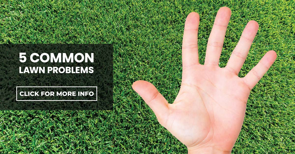 5 Common Lawn Problems & How to Avoid Them