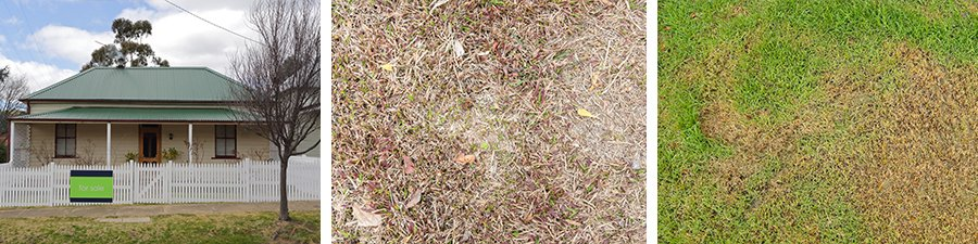 Turf Tips All about thatch